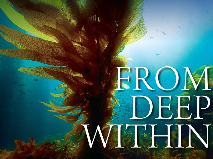 From Deep Within – announcement of winning entries
