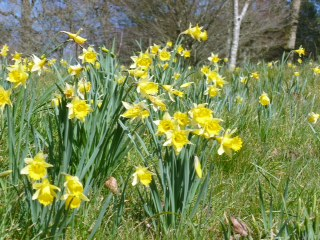 26th March 2017 – The Joy of Yellow