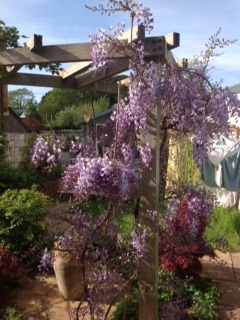 29 May 2016 – Wisteria and Washing