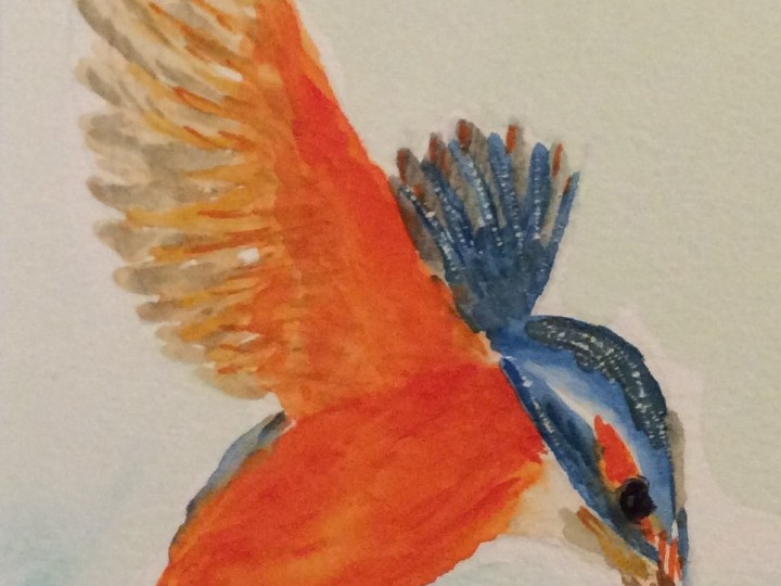 Sunday 13 December 2015 – kingfishers again