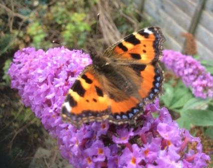 14th October 2017 – Butterflies