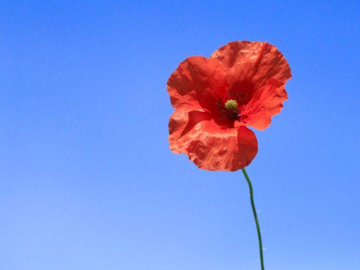 Saturday 7th November 2020 – Remembrance
